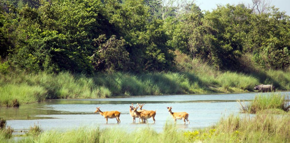 Bardiya Tour Package - Bardia National Park Safari