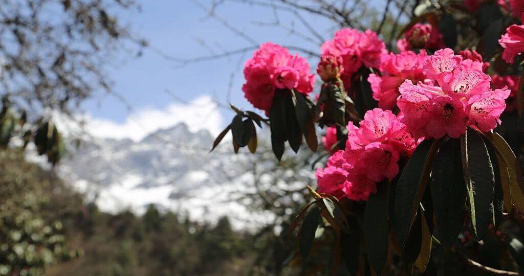 trekking in nepal in april