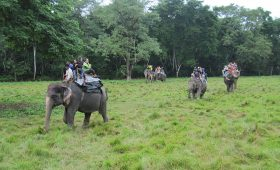 Chitwan National Park Nepal Tours