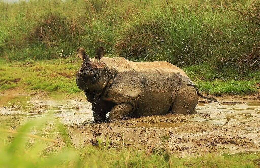 Chitwan National Park - Places to See in Nepal