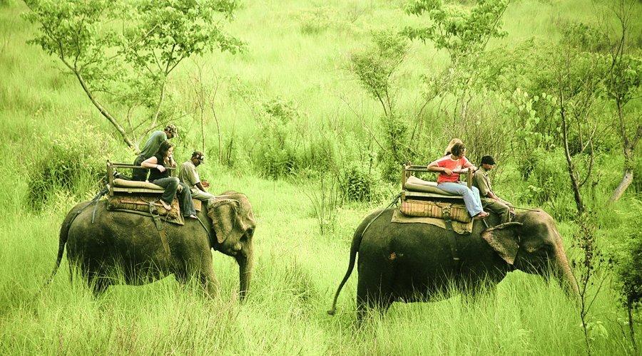jungle-safari2